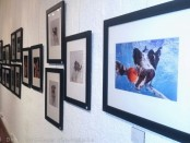 Celebrating National Dog Day at The Perfect Exposure Gallery. Photo by Demi Goddess Chronicle