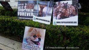 yulin_dog_march8