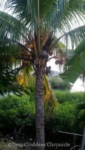 Grenada16