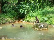 Sulpher Springs in Clabony, the Interior of Grenada's jungle. Photo credit: demigoddess chronicle