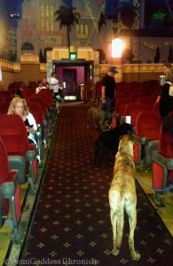 Audience members with their dogs. Photo credit DemiGoddessChronicle.com