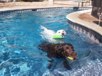 swimming dogs with arthritis